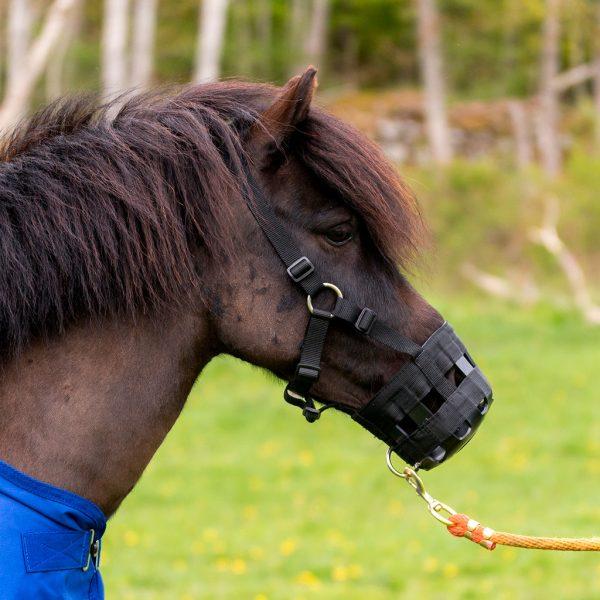 munkorg häst globus